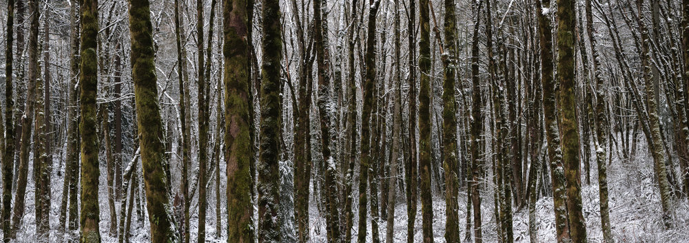 snowy panorama forest pnw oregon