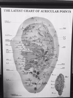 Auricular Chart.jpg