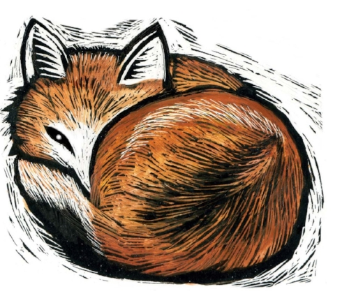 sleeping fox copy.jpg