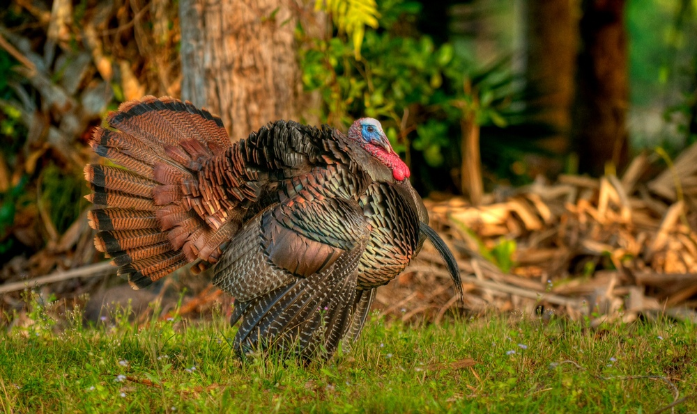 1000  images about Hunting turkeys on Pinterest | Wild turkey ...