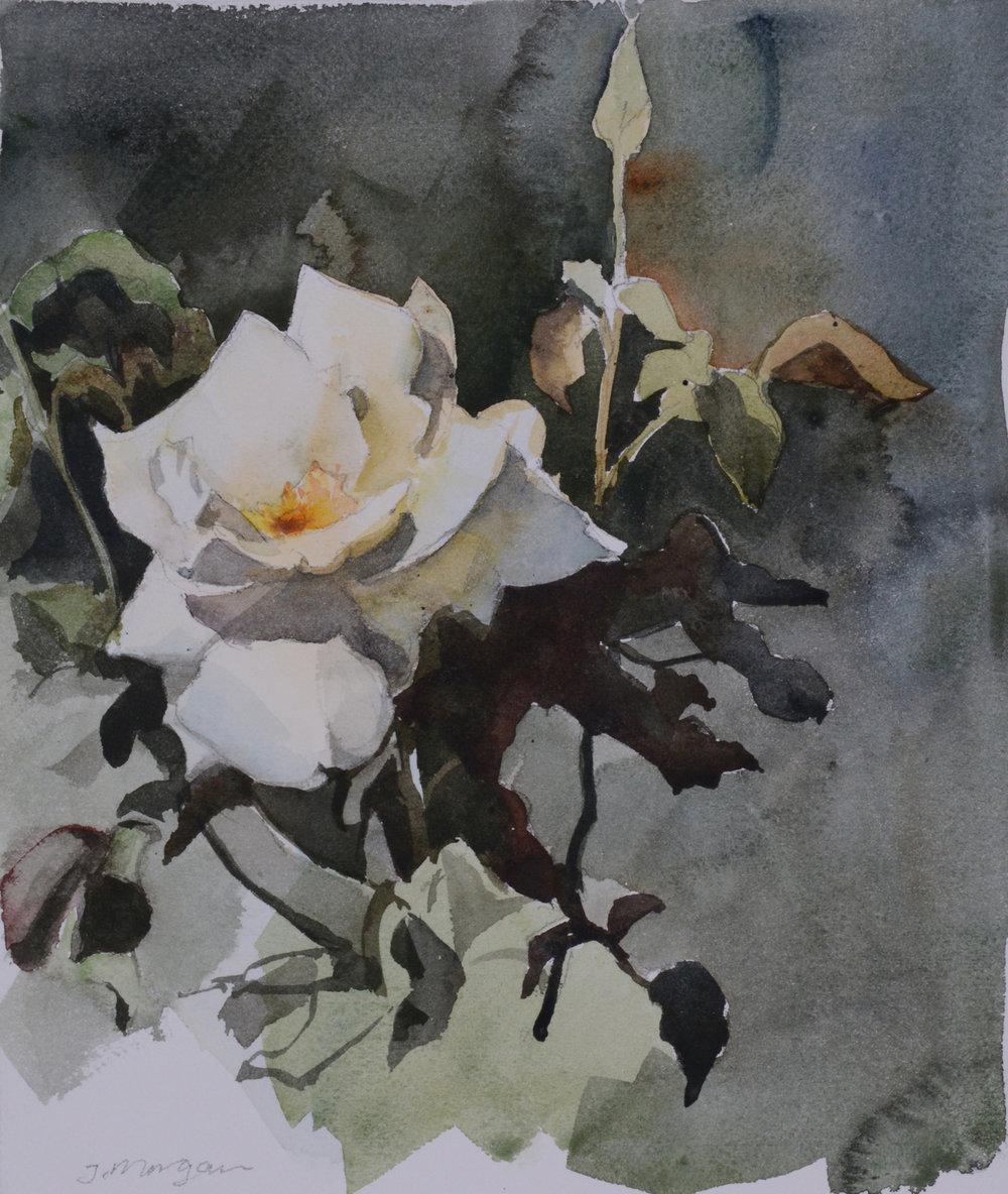 """Rose   Watercolor, 12"""" x 10"""""""