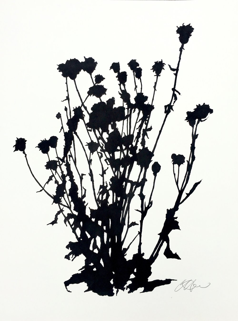 Dead Thistle Study (1), April, The Little,  ink on paper, 24 x 18""