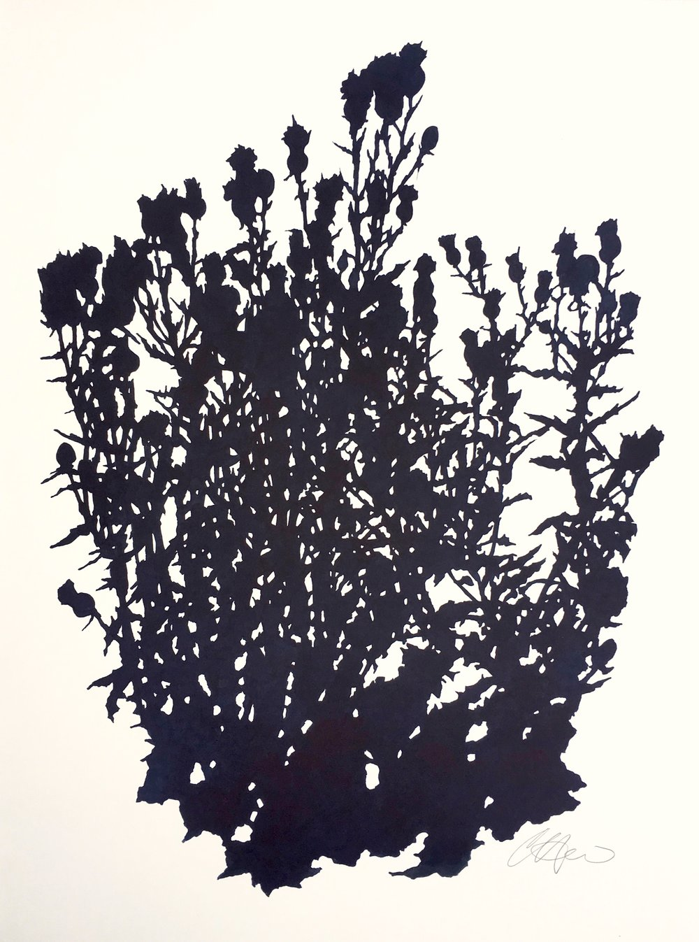 """Thistle Study, Matfield Green 1 (August), ink on paper, 30 x 22.5"""""""