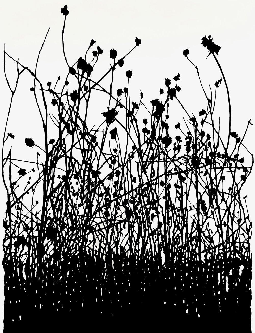 "Winter, Dead Prairie , ink on paper, 50 x 38"""