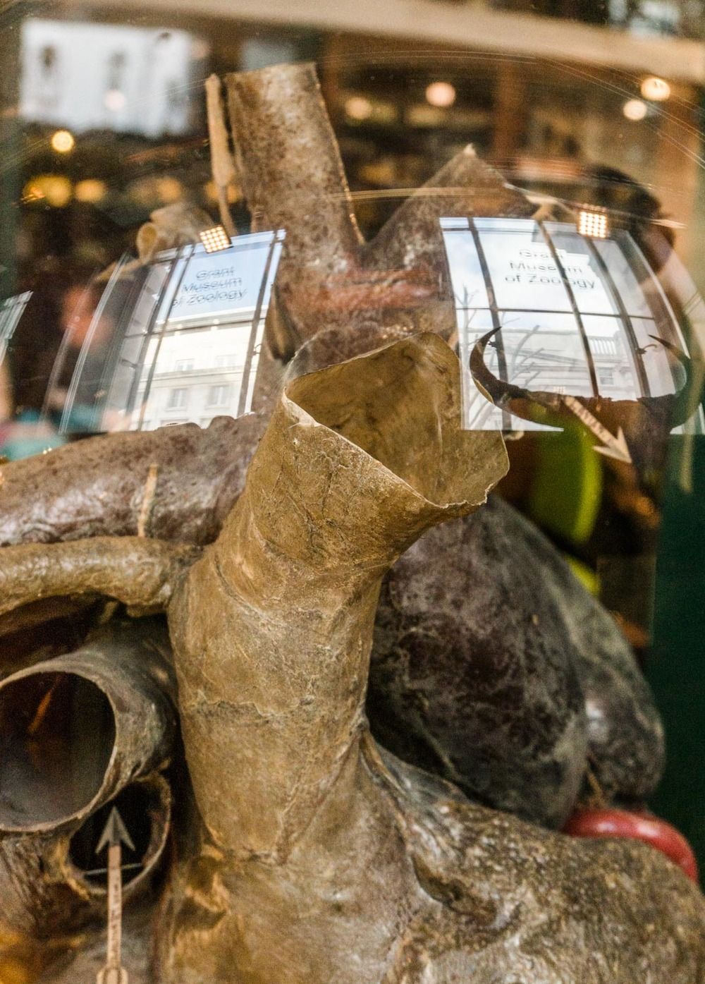 An elephant heart, and interesting reflections