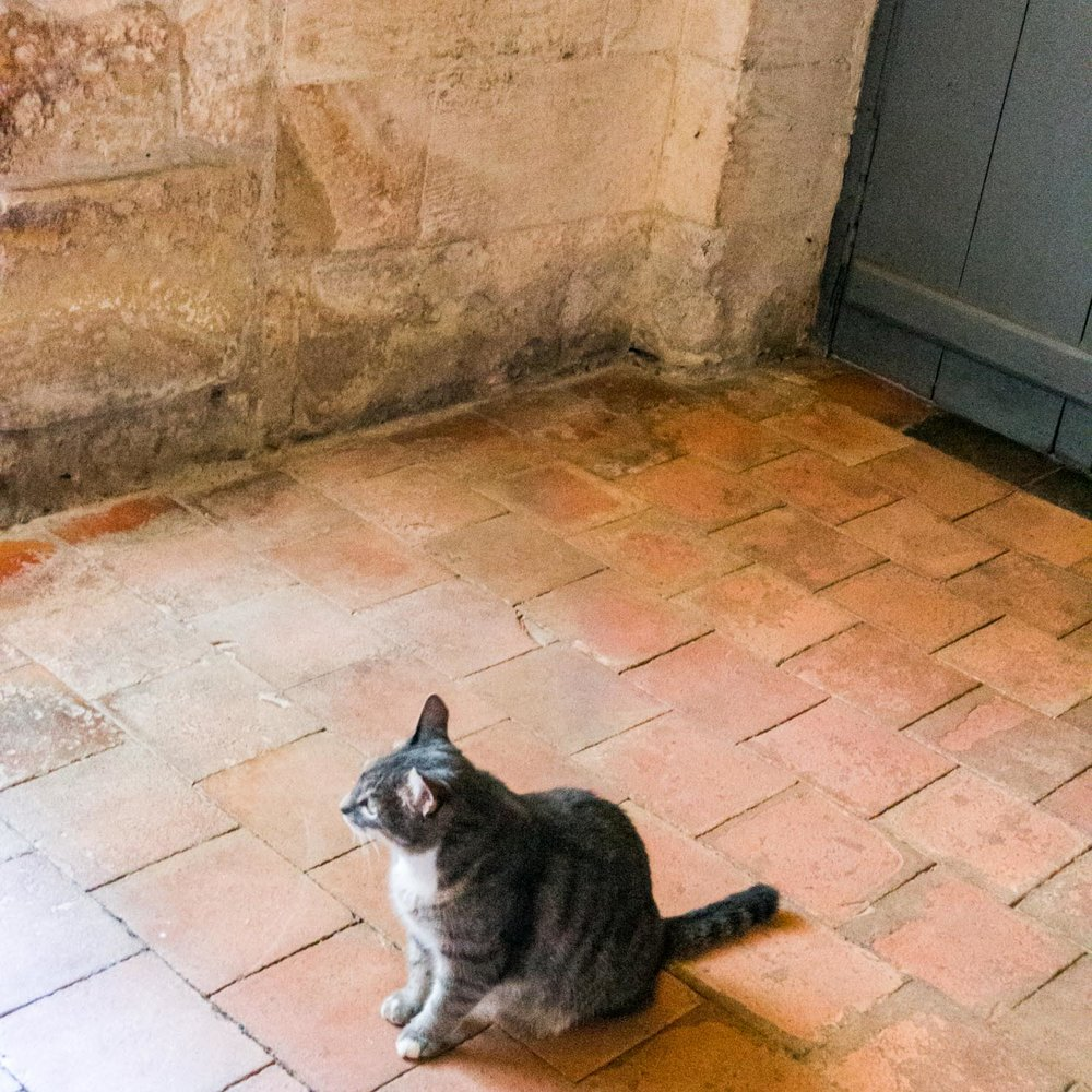 The chateau kitty, who paused here for a quick pat before shooting off again