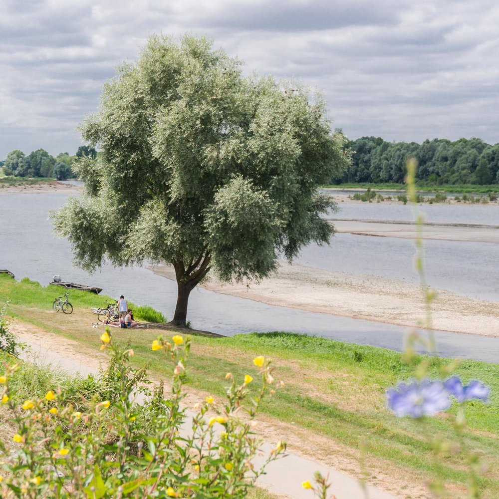 Picnic on the banks of the Loire