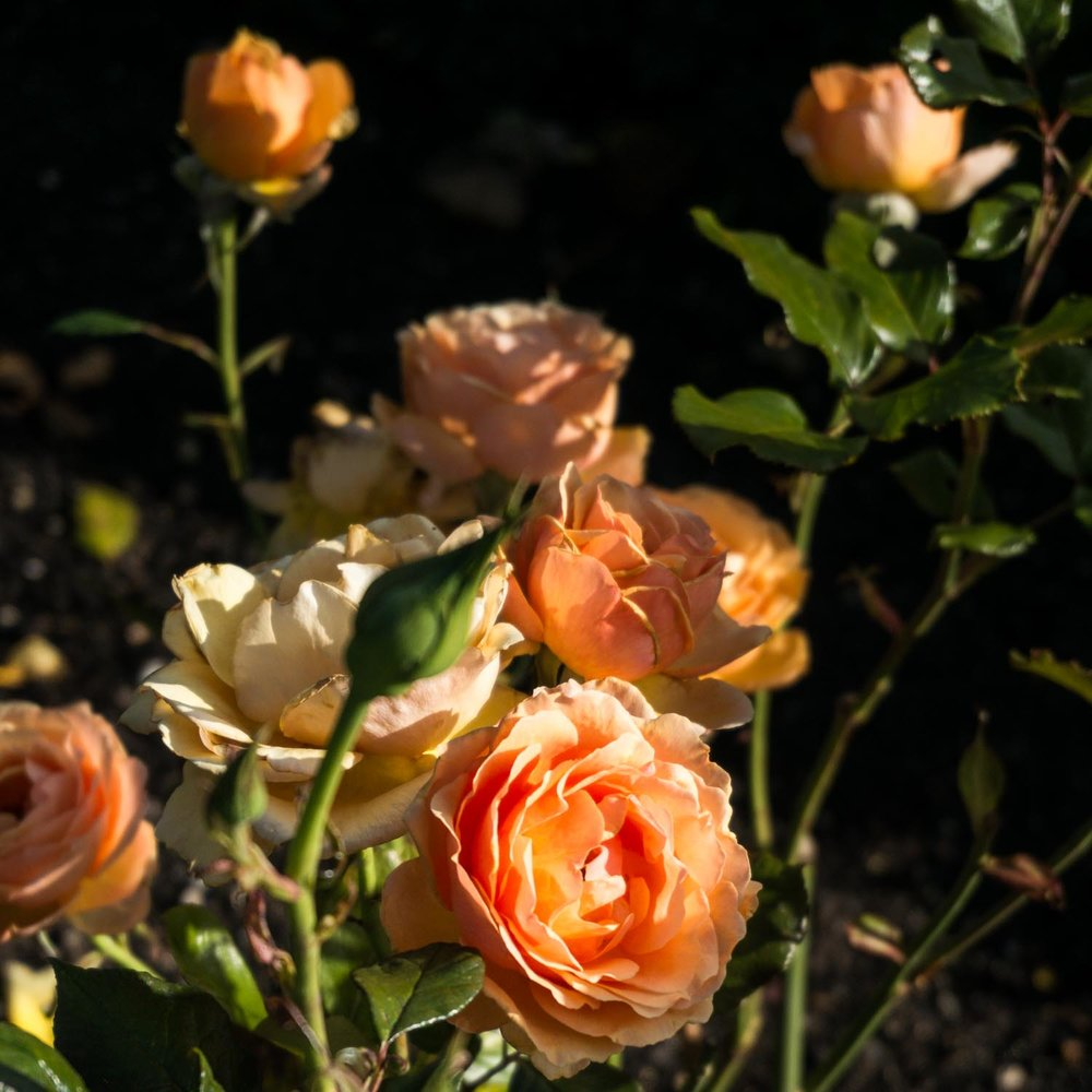 The roses were just gorgeous!