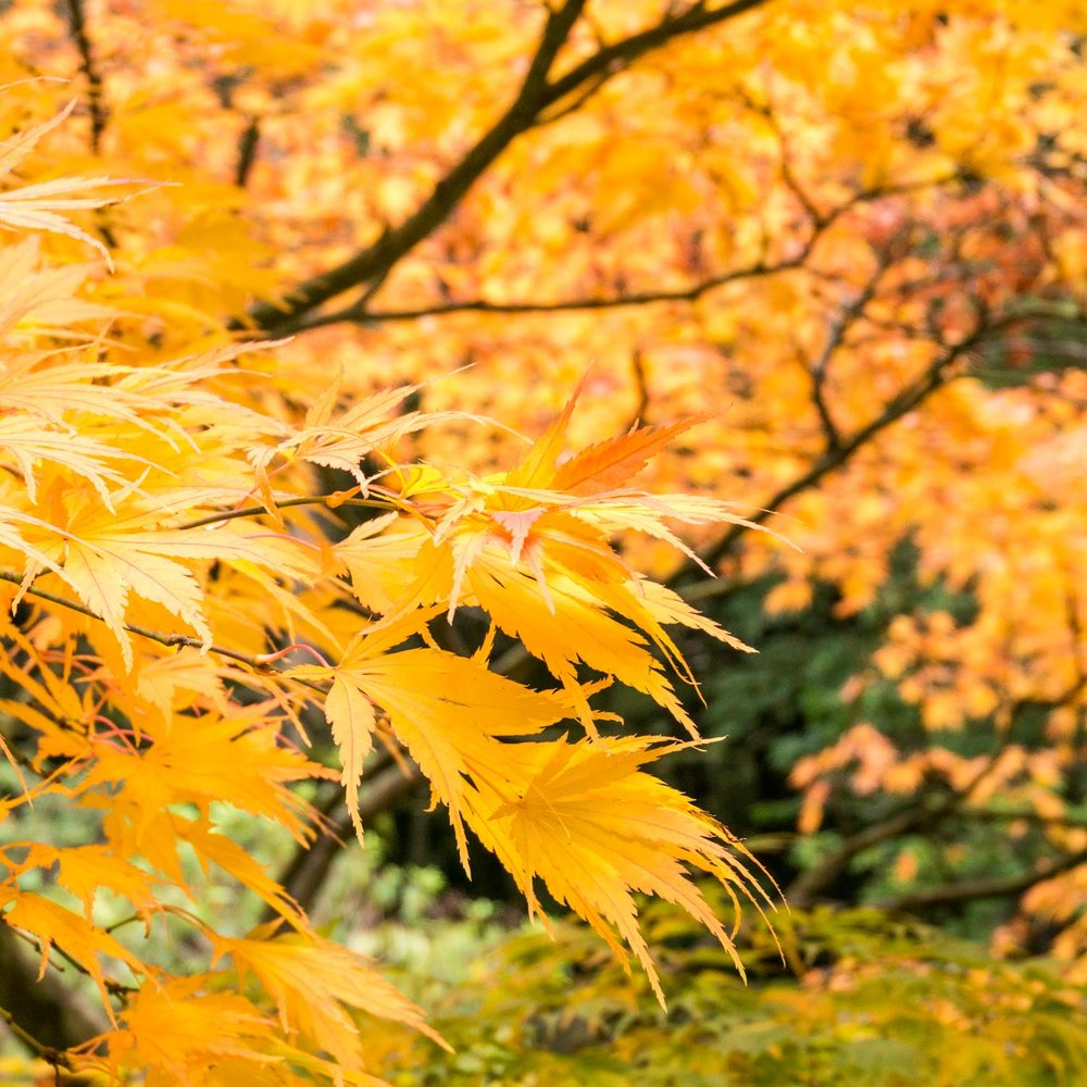 Autumn was so vibrantly coloured at Chatsworth!