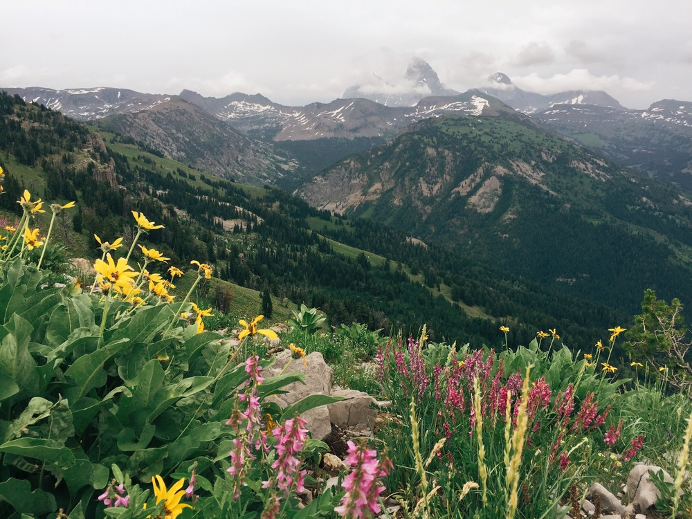 "The view of the ""Idaho side"" of the Tetons framed by wildflowers on the hike up to Peaked Peak at Grand Targhee."