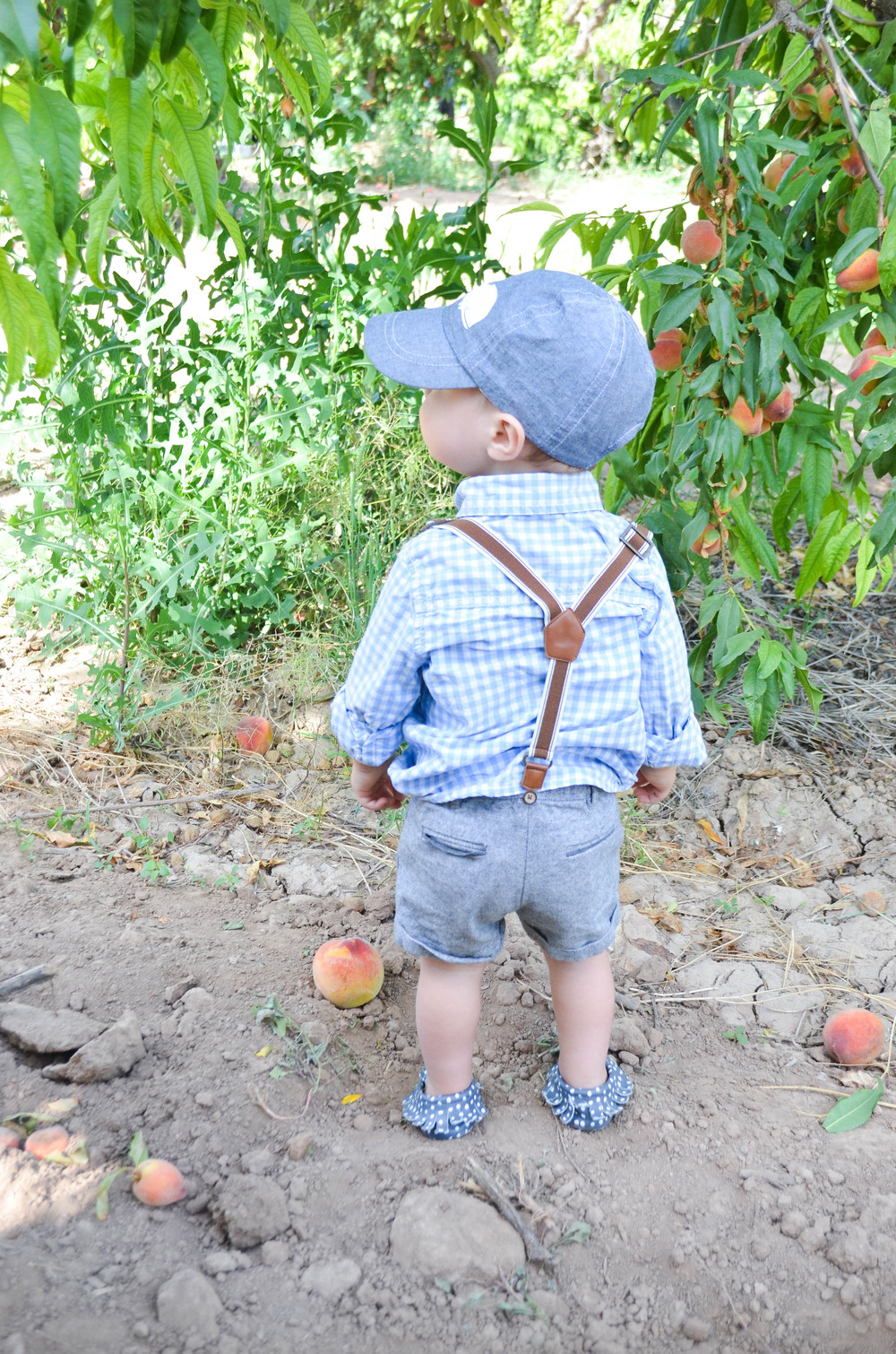 Picking Peaches at Schnepf Farm | Momma Society-The Community of Modern Moms | www.MommaSociety.com