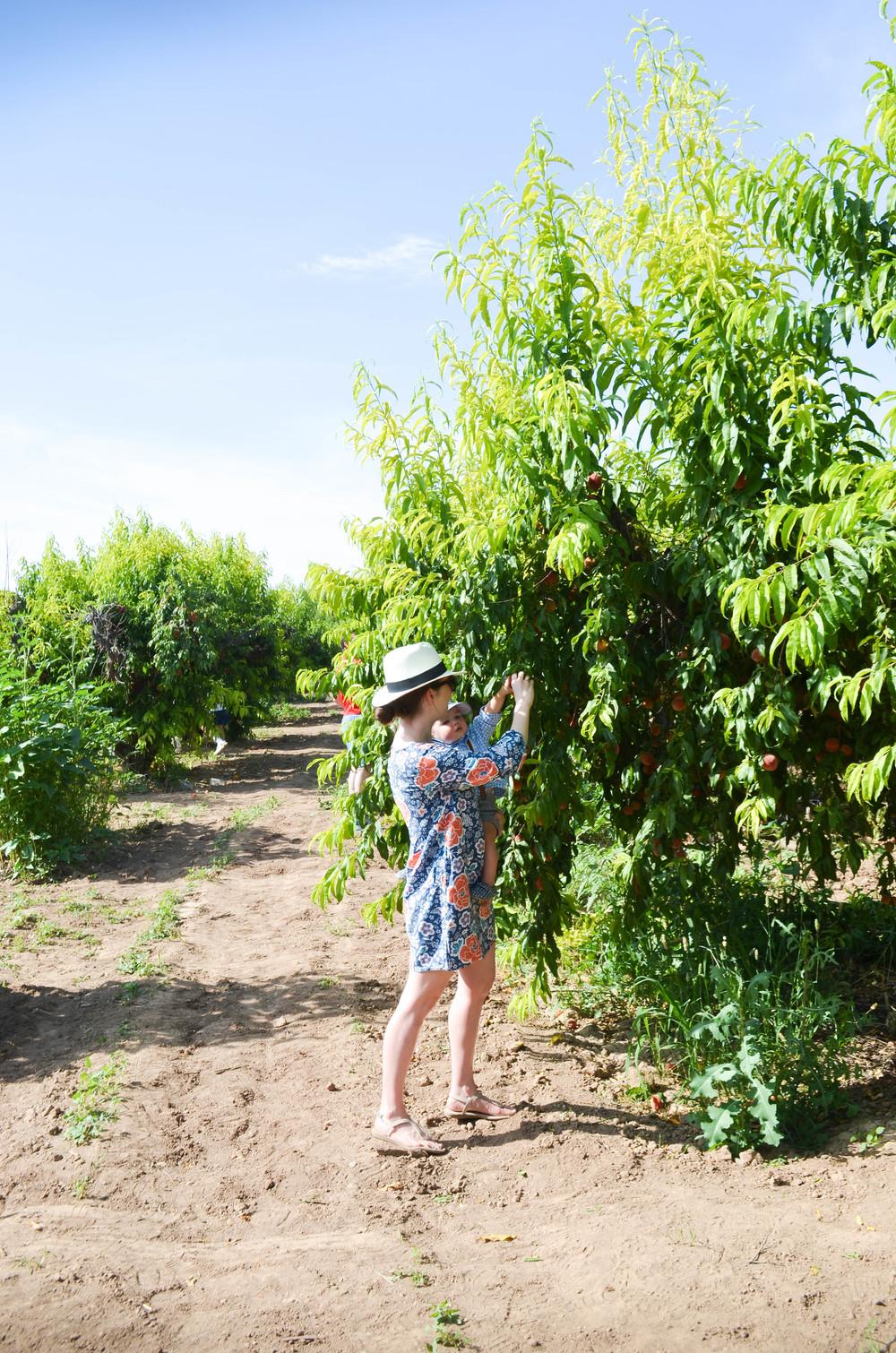 Picking Peaches at Schnepf Farm | Momma Society-The Community of Modern Moms | www.MommaSociety.com