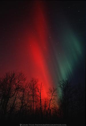 red aurora borealis minnesota 24x36 gallery wrapped canvas