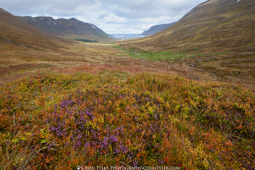 A palette of autumn colors and berries in Skagafjörður , on northern Iceland's Troll Peninsula.