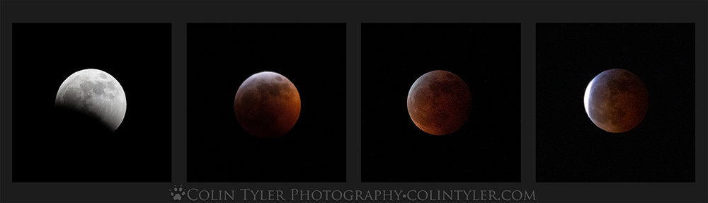Eclipse Collage copy.jpg