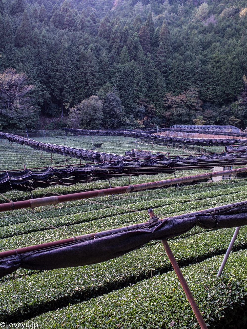 10- It was just amazing to come out of the mountain and discover this little valley and all the tea farms.