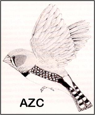 Antwerpse Zebravinkenclub