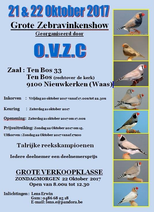 OVZC Grote Zebravinkenshow