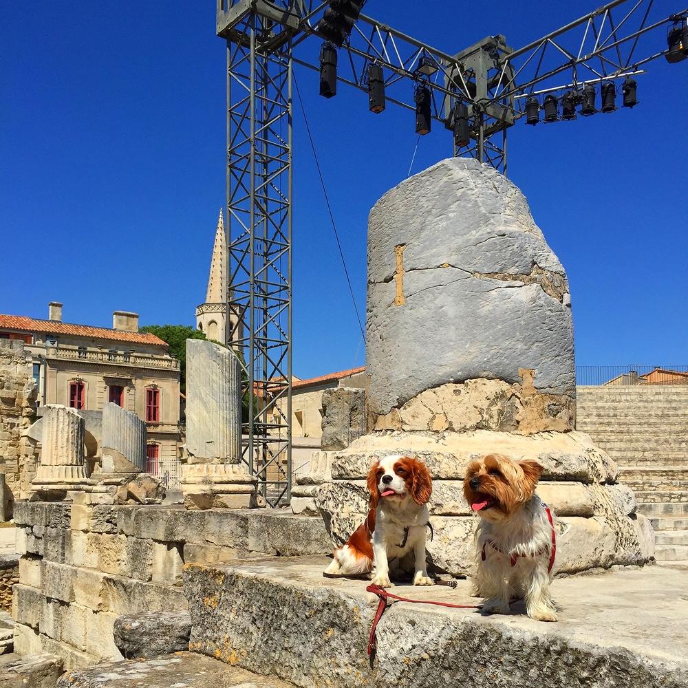 Oscar et moi avons adorés nous balader dans l'Amphithéatre d'Arles