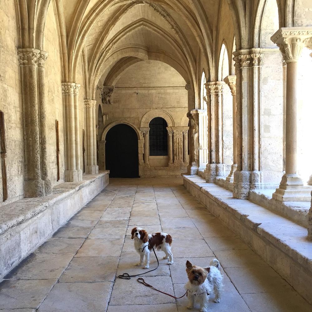 Arles est la ville la plus accueillante pour les chiens, la preuve au sein du Cloître Saint-Trophisme