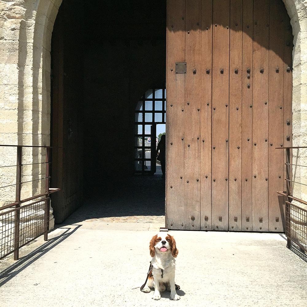 Oscar, a l'entree du pont d'Avignon
