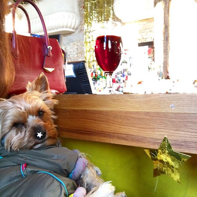 About last night. Woke up like this at the bar with some wine and confetti on my nose. Anyone knows if I behaved well?? 🍾🎄🐶😘🐾
