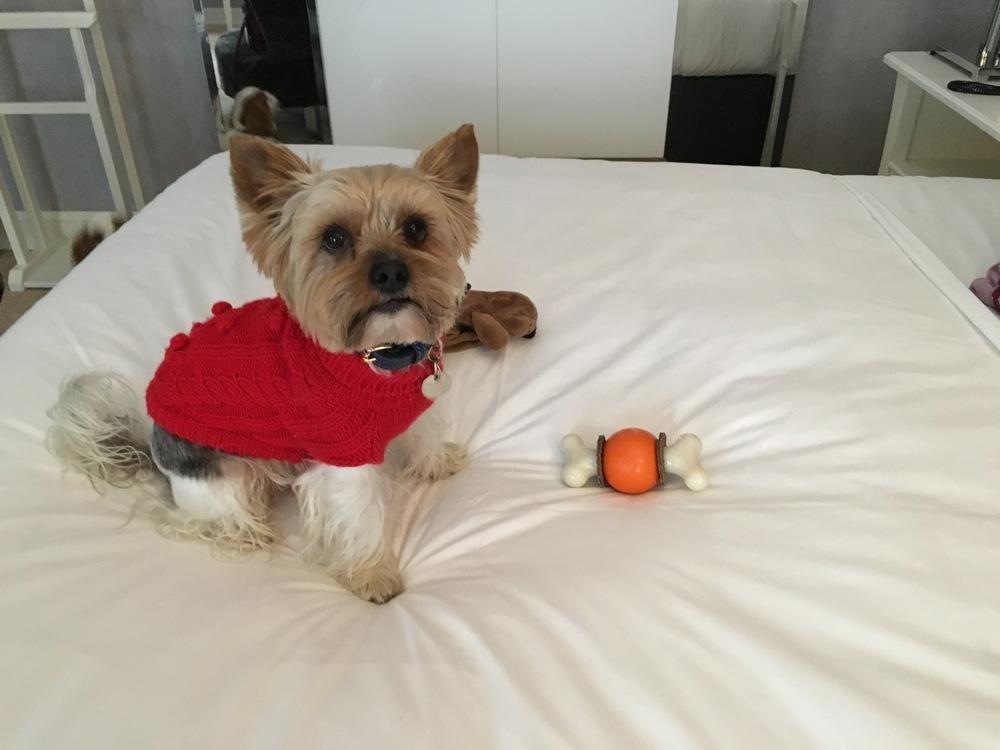 Et oui, je teste mon nouveau jouet sur le lit king size des parents!