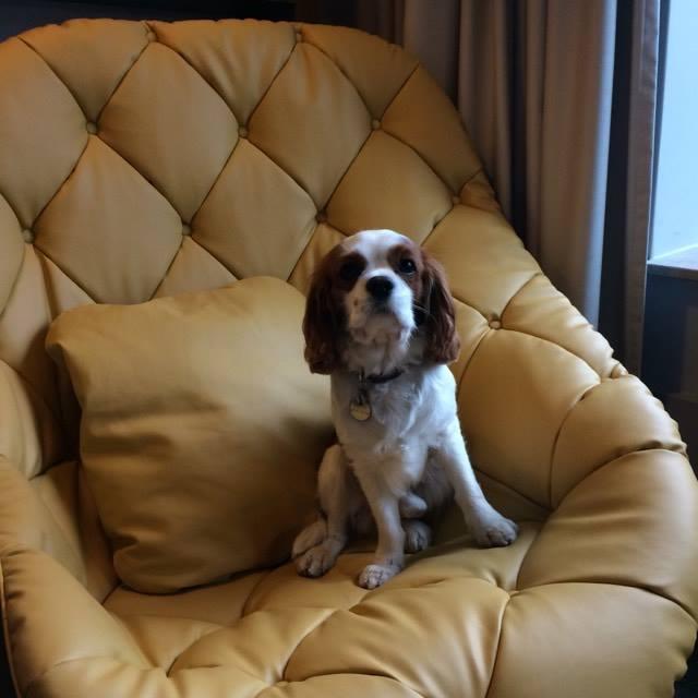 éPUISé PAR NOS VISITES, je suis resté dans ma chambre me reposer sur mon fauteuil super cozy