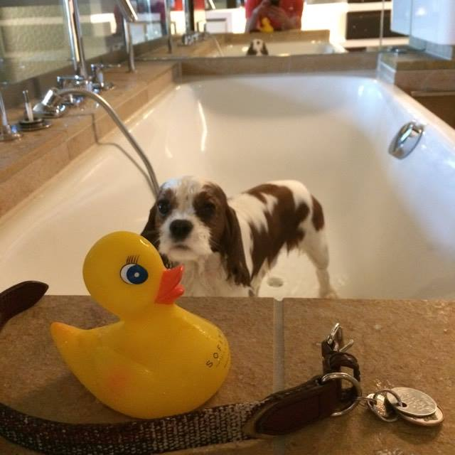 Oscar prenant  son bain avec son canard sofitel