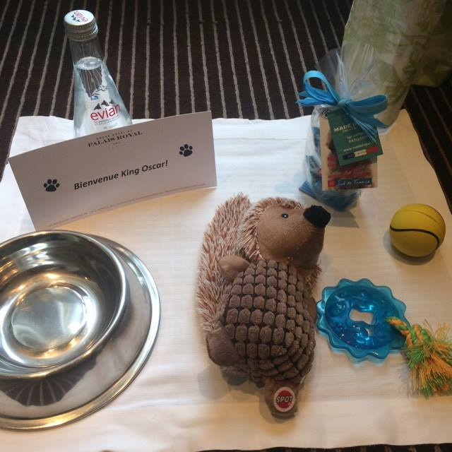 Oscar reçu comme un vrai Roi: mini-cupcakes @madeinpet, Eau Evian et jouets pour ses siestes
