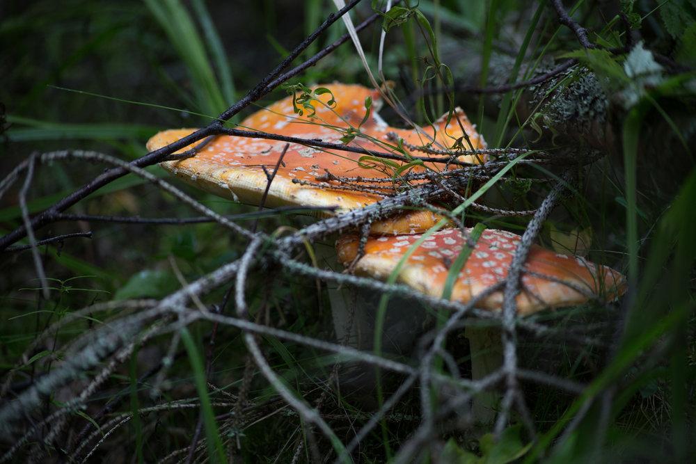 Fungi-0513.jpg