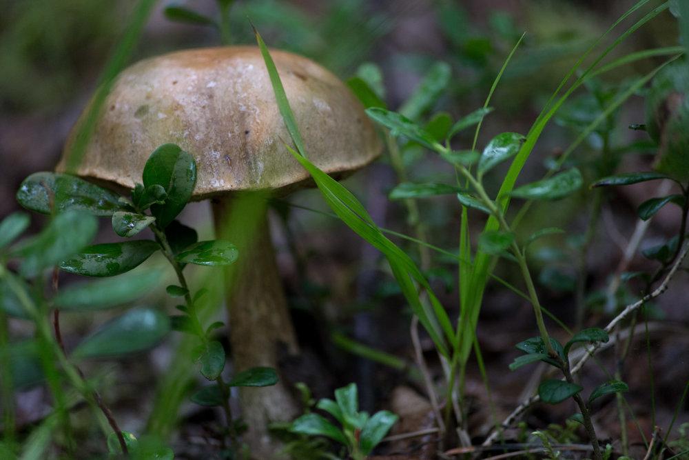 Fungi-0524.jpg