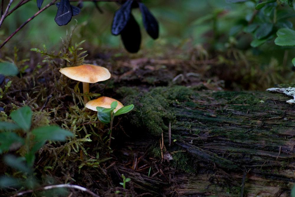 Fungi-0543.jpg