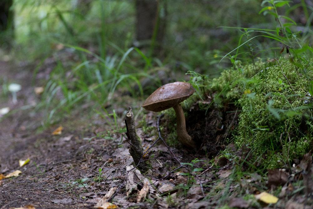 Fungi-0519.jpg
