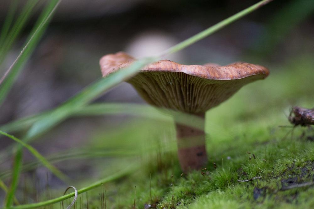 Fungi-0516.jpg