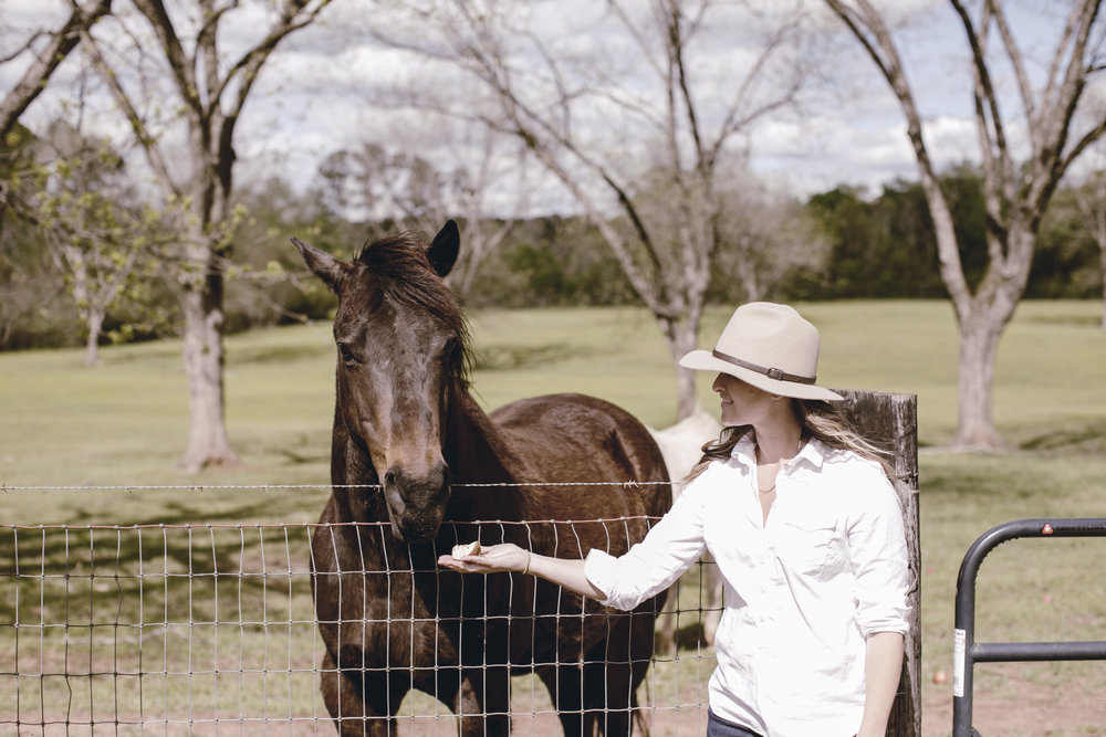 black horse at the farm / heirloomed