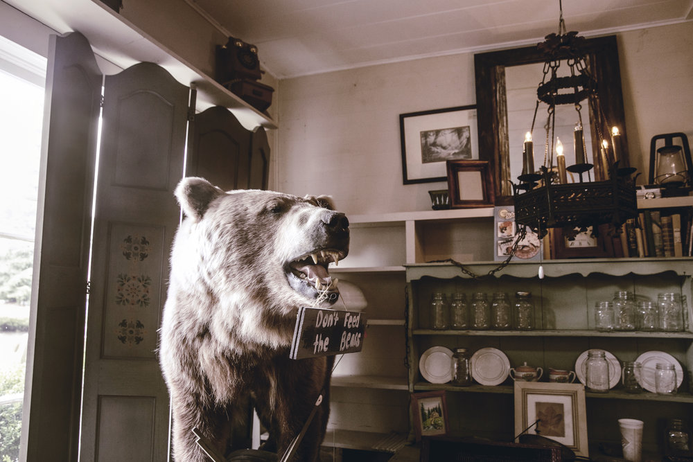 taxidermy bear in antique store / heirloomed travel