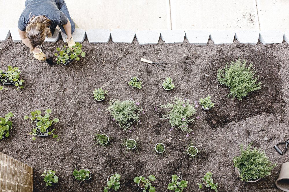 planting your farmhouse garden / heirloomed for the Home Depot garden series