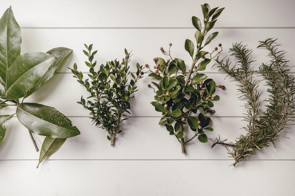 herbs / heirloomed