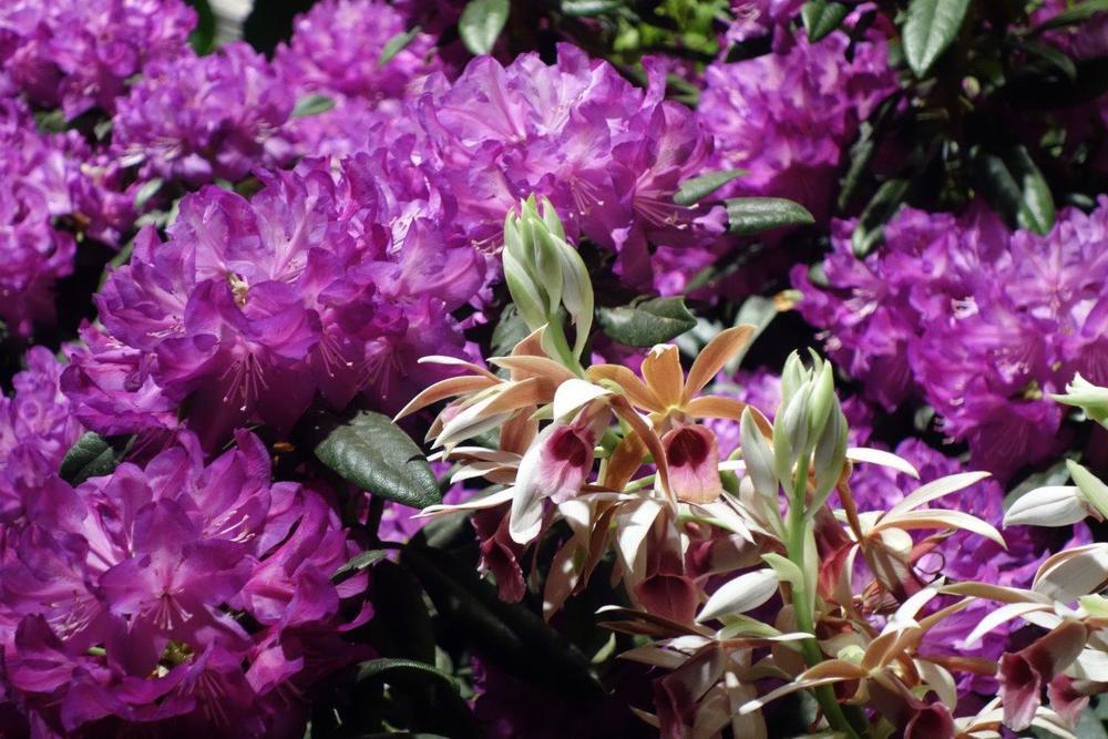 2015-03 Macy's Flower Show (20).jpg