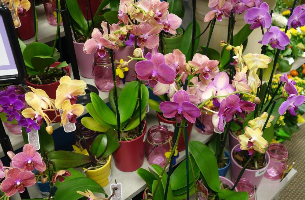 2015-03 Macy's Flower Show (34).jpg