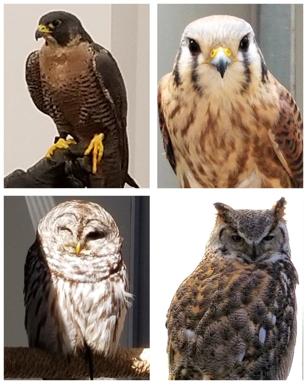 Bird Group 1.jpg