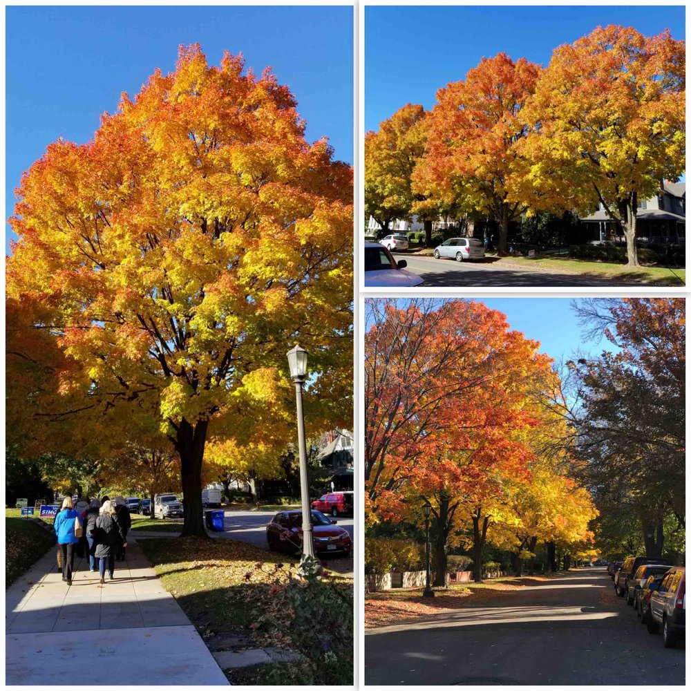 Fall Colors Grouping.jpg