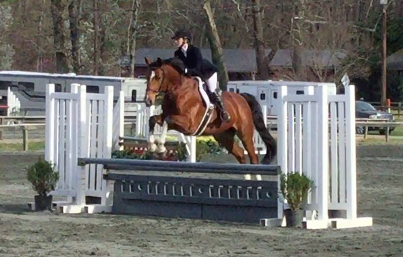 Lauren McCarthy showed By My Side in his first Hunter show this weekend. Getting a 4th Pre-childrens Eq U/S with a Big field of competition!