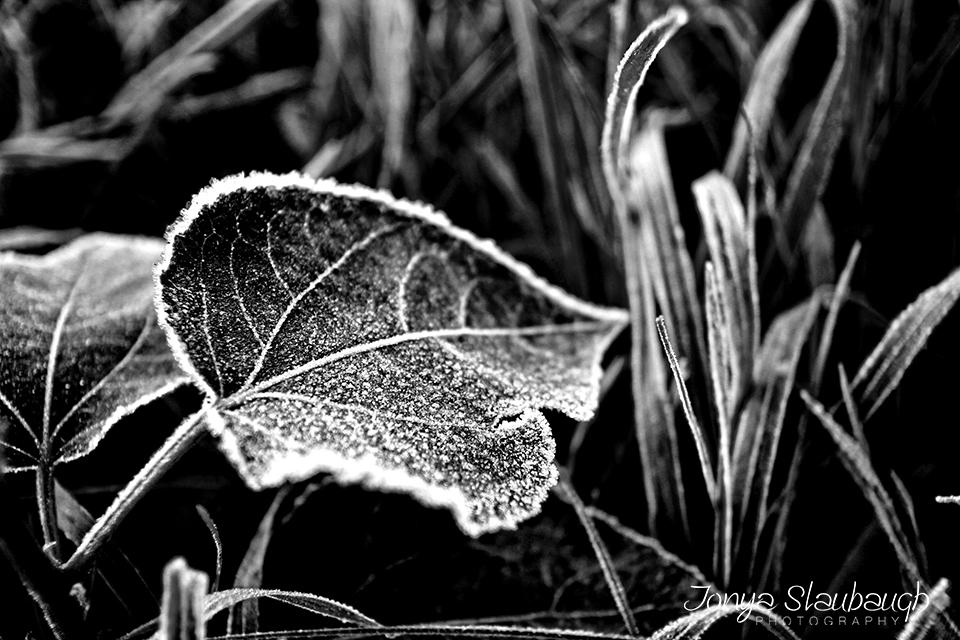 BW Frost.jpg