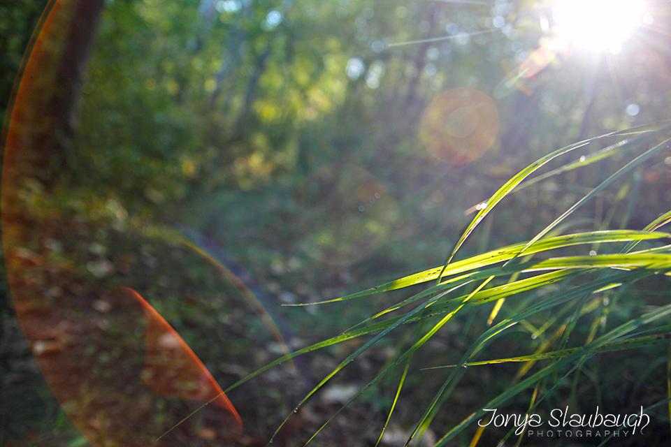 ForestySun.jpg