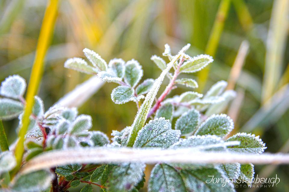 Frosty Fall.jpg
