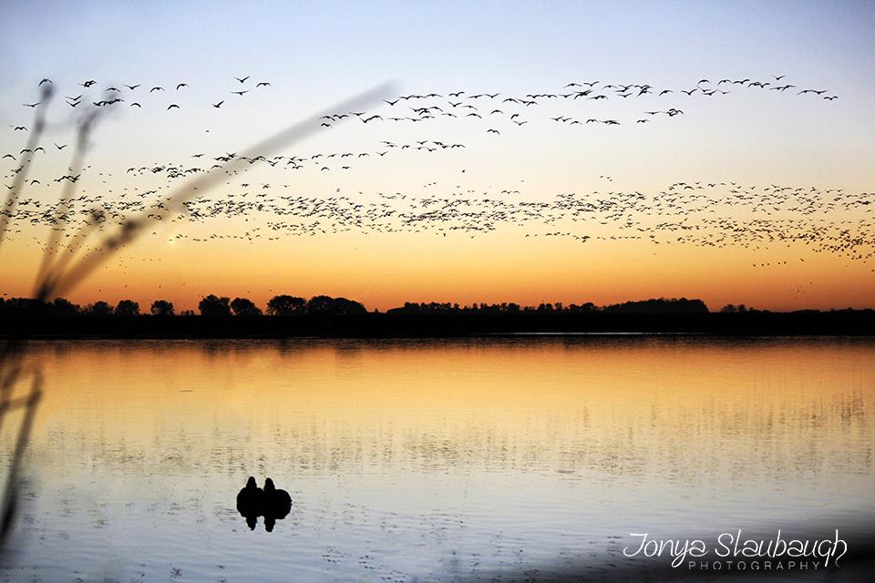 BirdsReflection.jpg