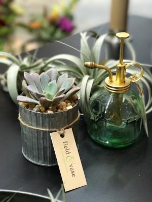 succulent F&V.jpg