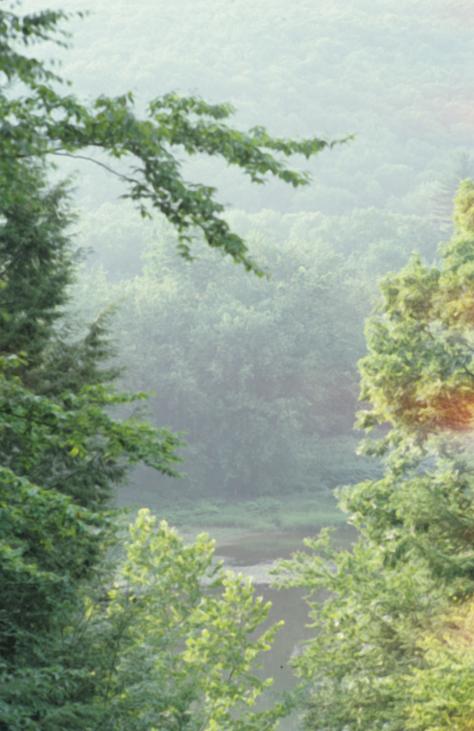 nature22.jpg